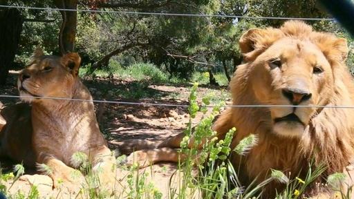 動画:シリアやイラクから逃れた動物たち、ヨルダンの保護施設に収容