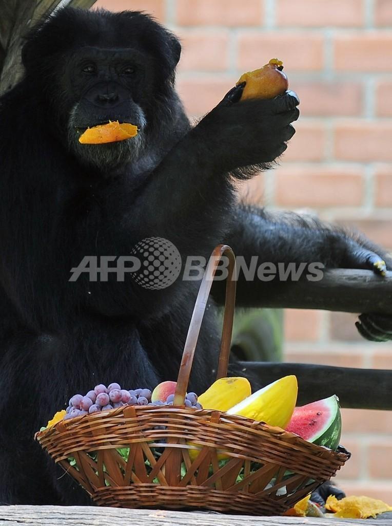 米政府、チンパンジー使った医療研究への出資打ち切り