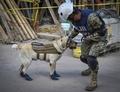 救助犬フリーダ、メキシコ地震で団結のシンボルに 一方で「尋ね犬」も