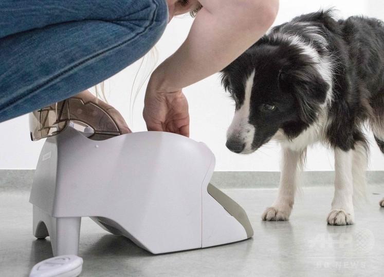 犬も脳トレ、ゲームで脳活性化 研究