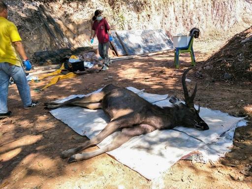 野生のシカの胃から7キロのごみ...レジ袋や下着など タイ