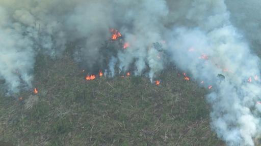 動画:アマゾン森林火災、ブラジル北西部ロンドニア州の空撮映像