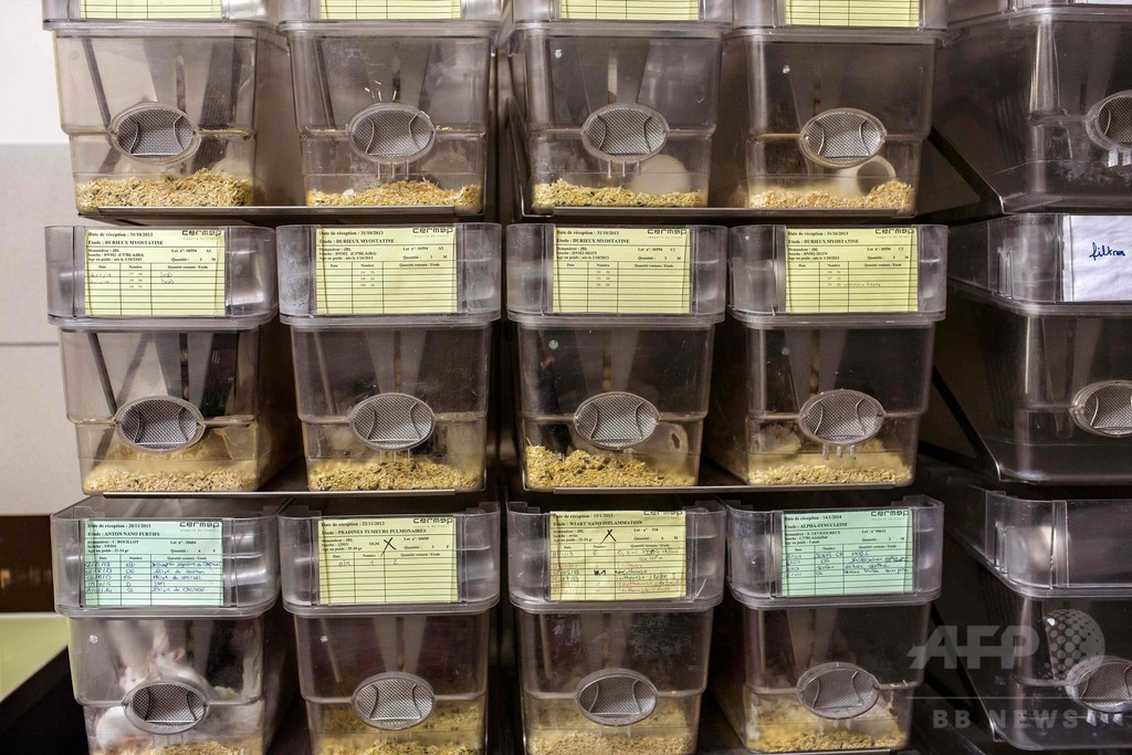 老化した細胞の除去で寿命が延長、マウス実験で確認