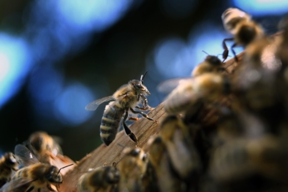 ドイツ、「昆虫保護法」の制定検討 環境相、殺虫剤の使用削減など計画