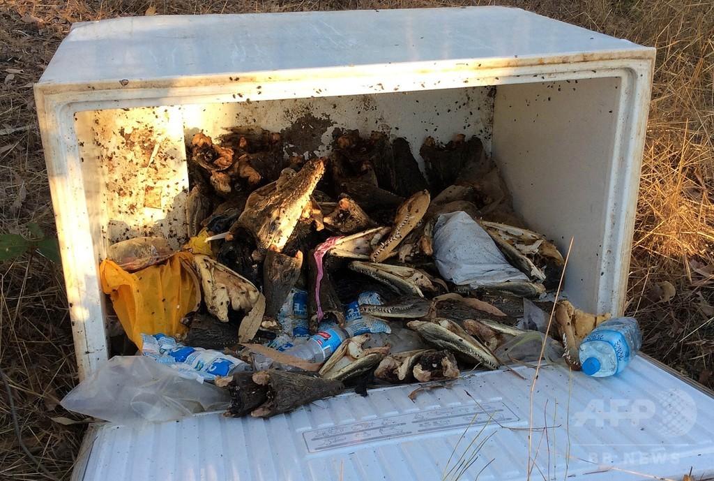 冷凍庫からワニの頭など70頭分、豪州