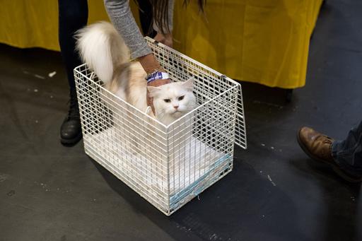 「キャットファイト」猫の別宅通いめぐる近隣紛争、ようやく和解