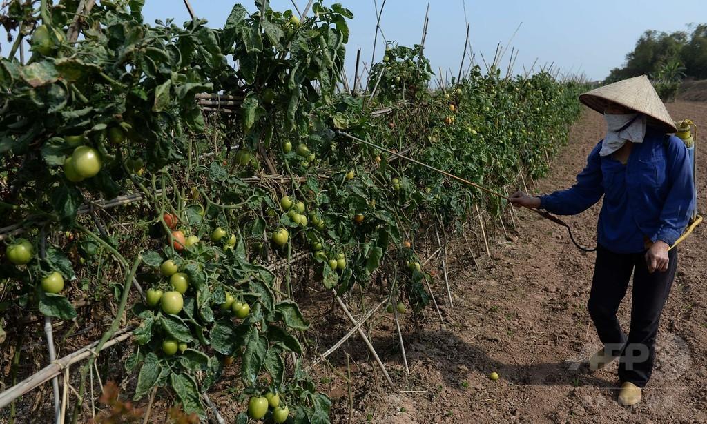 過去90年で最悪の干ばつ、ベトナム
