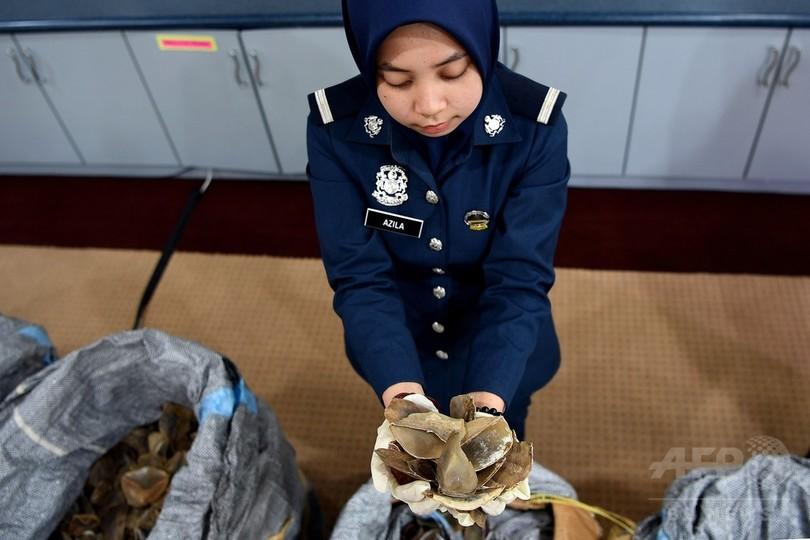 センザンコウのうろこ700キロ超押収、マレーシアで過去最大
