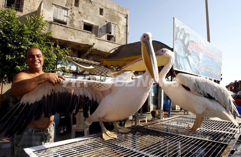 港町で漁師と暮らすペリカン、レバノン