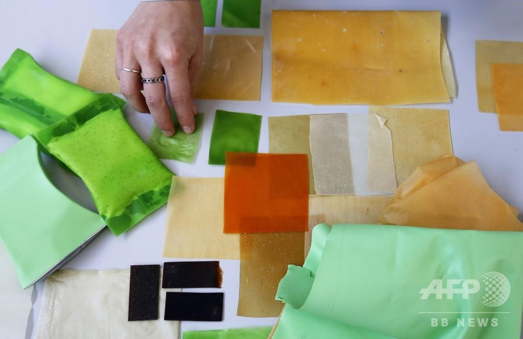 メキシコのサボテン、世界のプラスチック問題への解決策となるか?