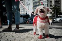 【写真特集】世界中の犬たち