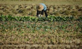 中国でベトナム人花嫁100人以上が集団失踪