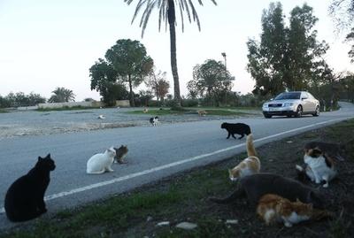 増えるキプロスの野良猫、経済危機の余波