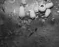 コロンビア沖に沈む財宝船発見、300年の謎に終止符
