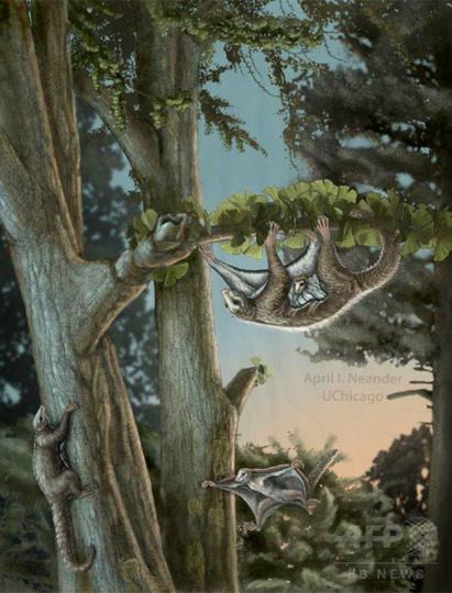 最古の滑空哺乳類、中国で化石発見 ジュラ紀に恐竜と共存