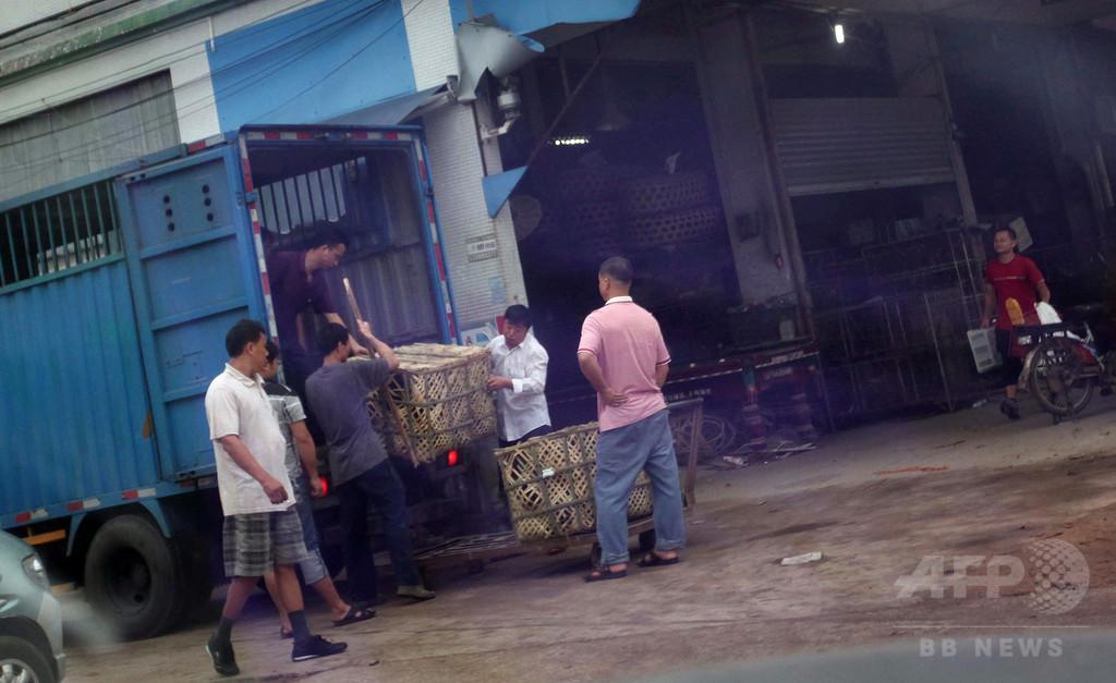「食べたら実刑」でも公然と市場に並ぶ希少動物たち、中国