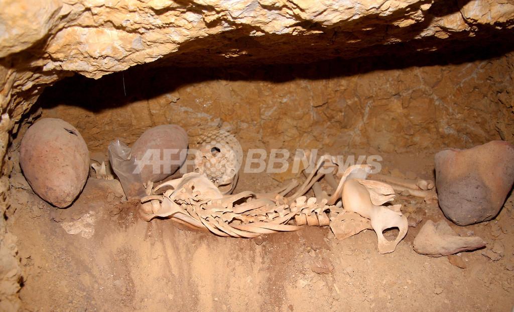 クフ王ピラミッド近くに労働者の墓、「奴隷が建設」の通説と矛盾 エジプト