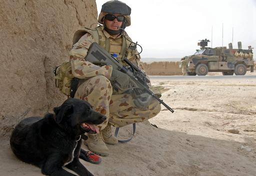 戦闘中に行方不明になった軍用犬、14か月ぶり生還 アフガニスタン