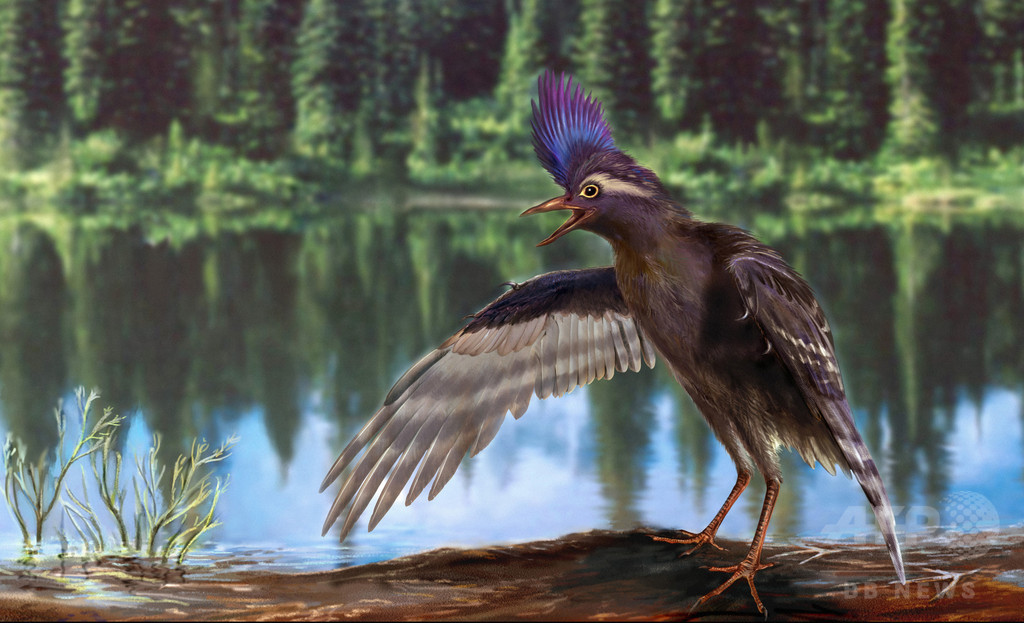 現生鳥類への進化、通説より600万年早かった可能性 中国研究