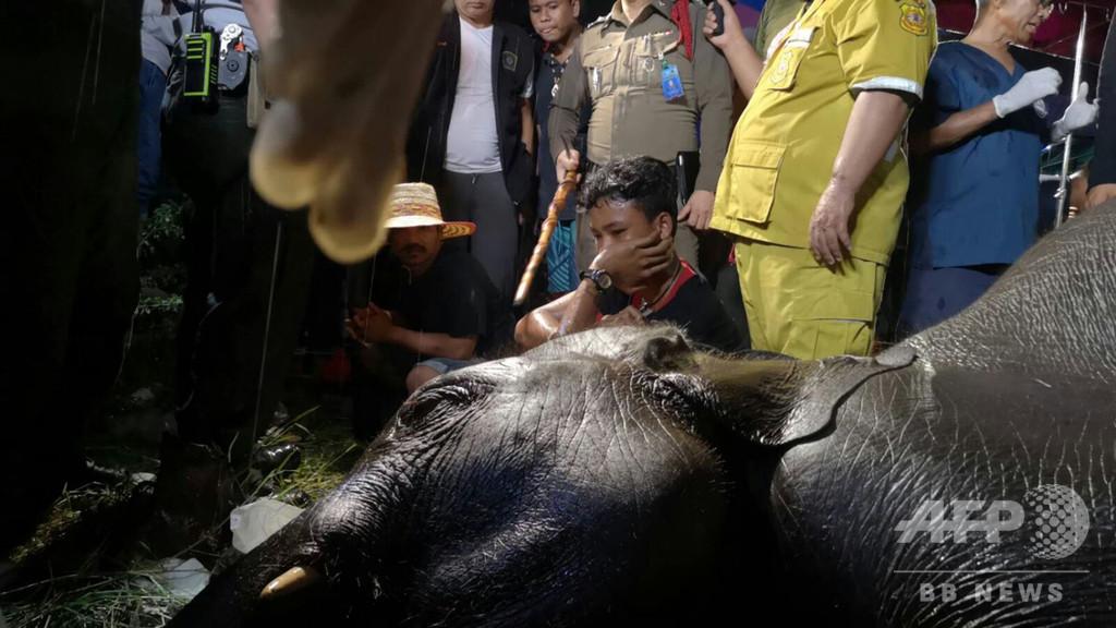若い雄のゾウ、排水溝に落ちて感電死 タイ