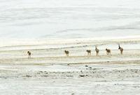 世界自然遺産登録が決定 ココシリの壮大な風景