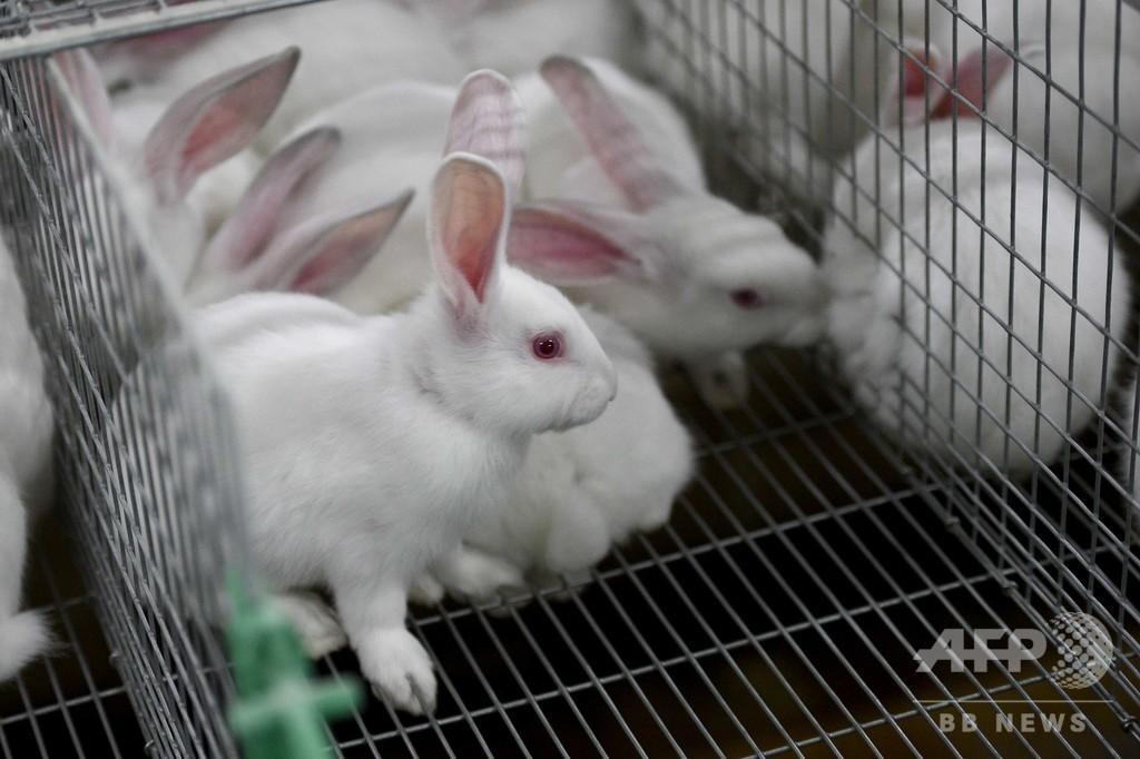 組織工学でウサギの子宮を修復、ヒトへの応用にも期待