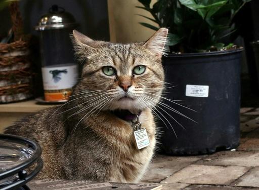 元野良猫たちがネズミ退治で大活躍、殺処分を免れ 米首都