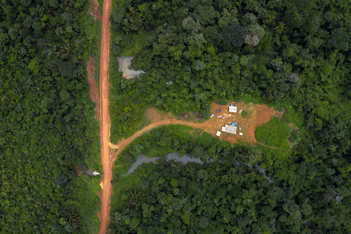 原生林の保護、カギは先住民に 研究