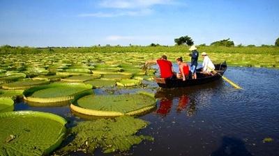 動画:地元の「国宝」 直径1.5mのオオオニバス パラグアイ