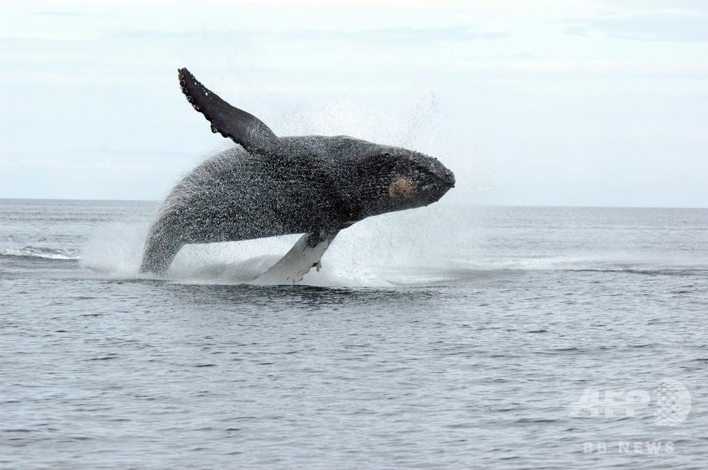 クジラに近づかないで 海洋哺乳類規則の改定後初の有罪判決 カナダ