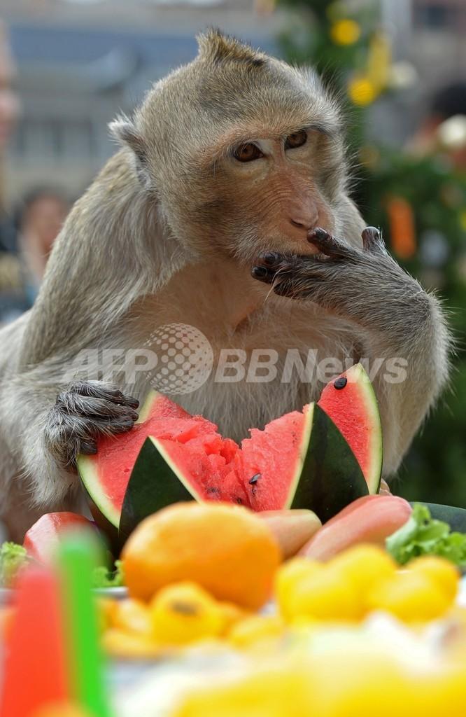 果物に囲まれて幸せ、タイのモンキー・ビュッフェ