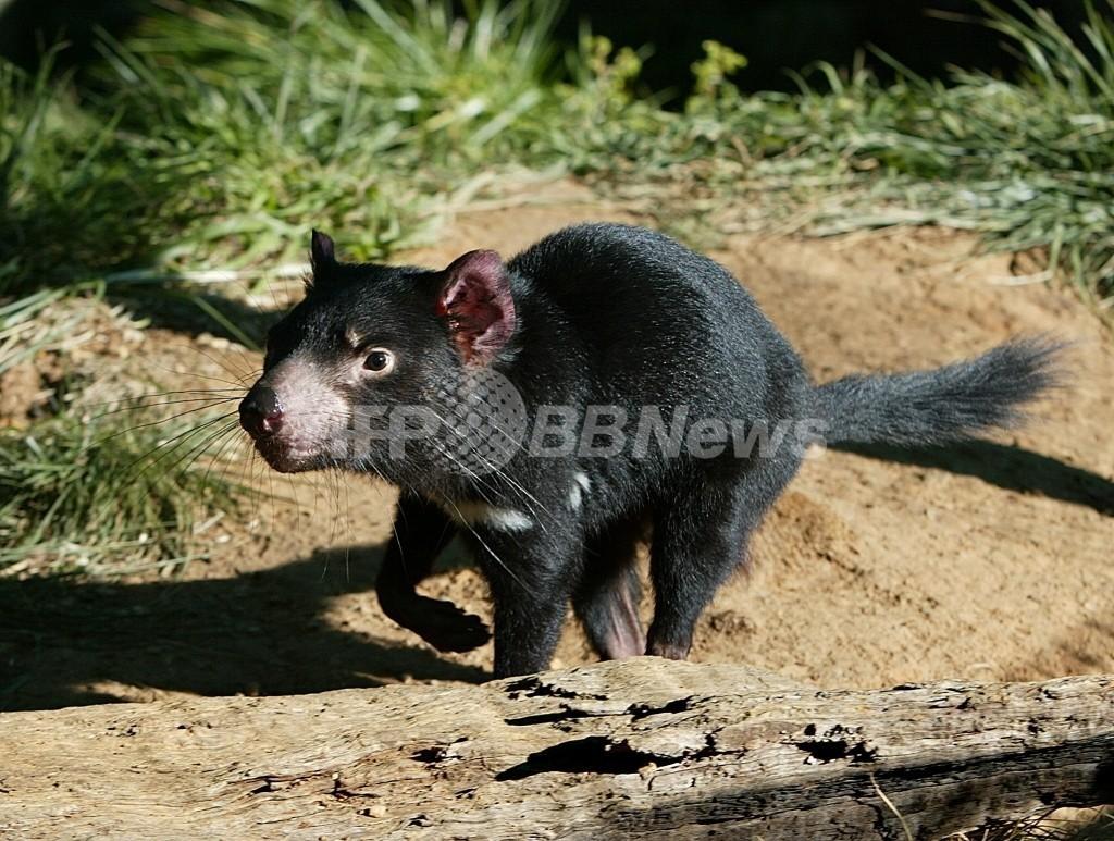 哺乳類の半分の種で個体数が減少、レッドリスト08年版