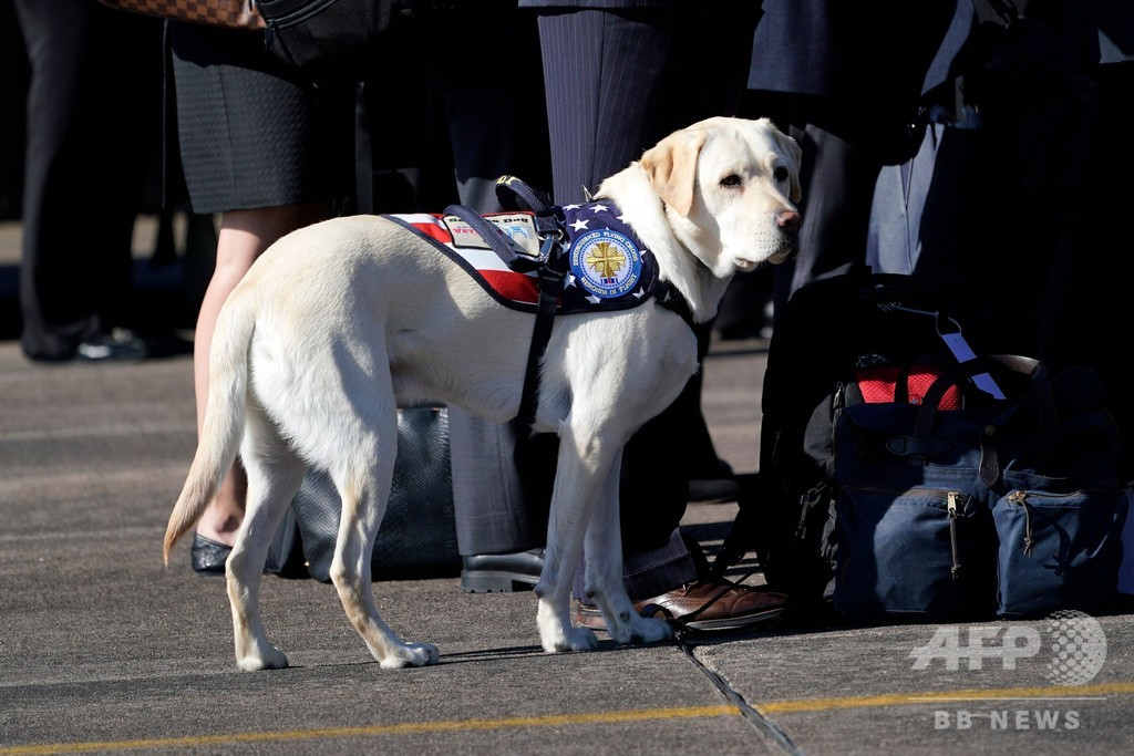 故ブッシュ大統領の介助犬、ひつぎの付き添い「任務完了」