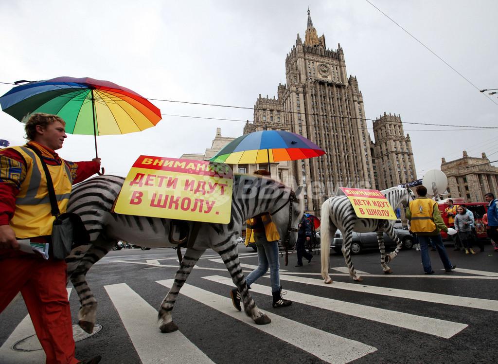 シマウマ色に塗った馬で交通安全イベント、動物愛護団体からは非難も