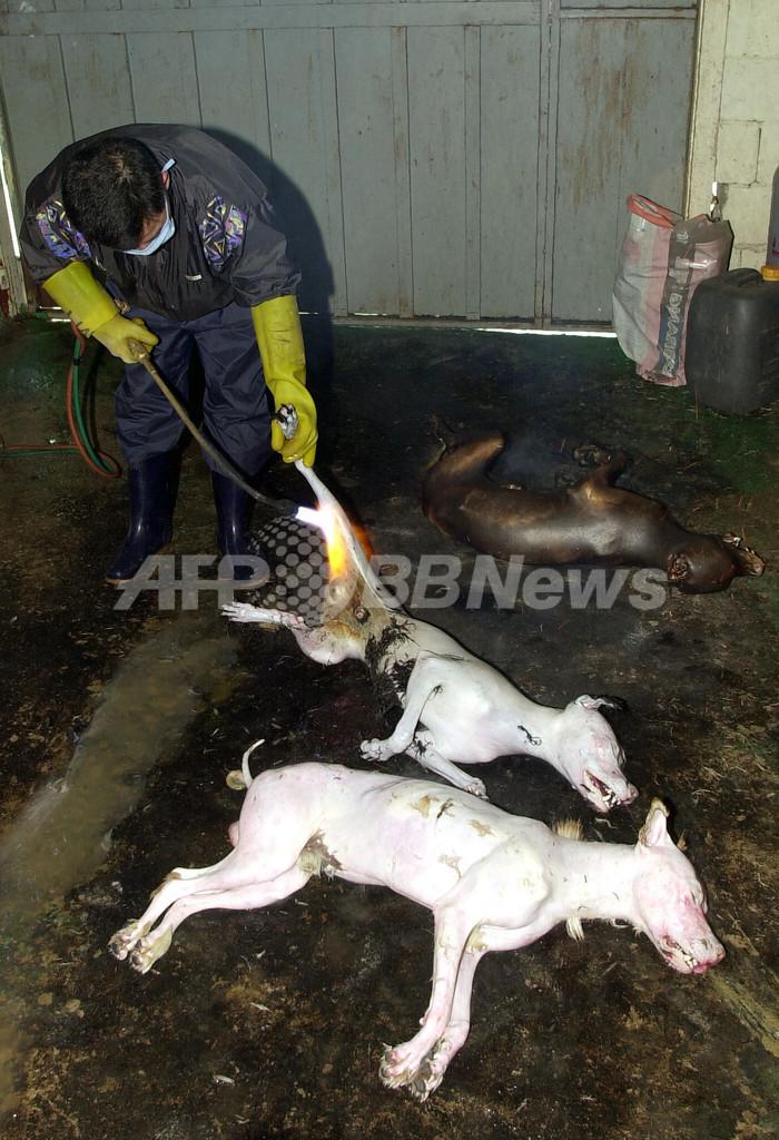ソウルの犬料理店、初の食品安全検査へ