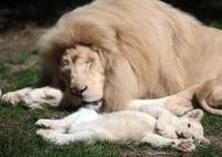 【特集】かわいい動物の赤ちゃん