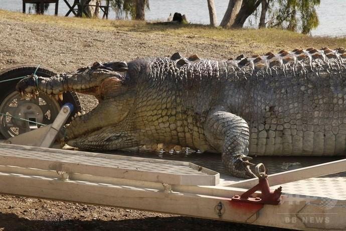 体長5.2メートルの巨大ワニ、射殺される 豪警察が犯人追う