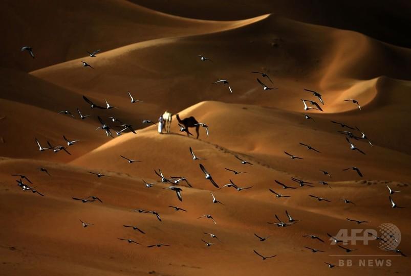 【AFP記者コラム】砂漠の魔法