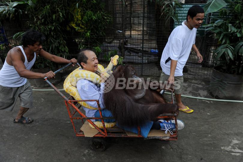 自ら動物愛護を率先、ニシキヘビとも仲良し フィリピン
