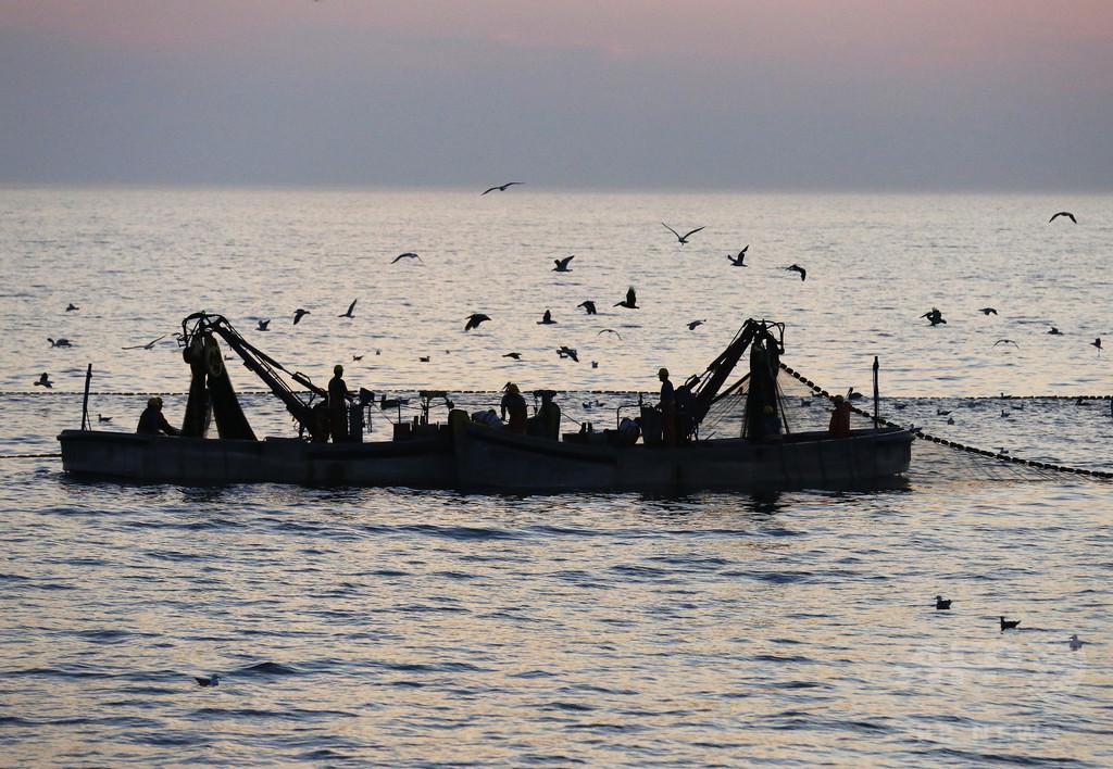 世界の海の生物、過去40年で半減  WWF報告書