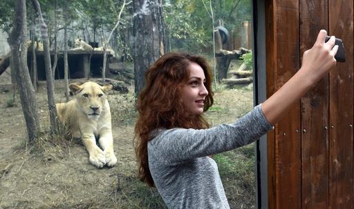 洪水で猛獣脱走の動物園、3か月ぶりに再開 ジョージア