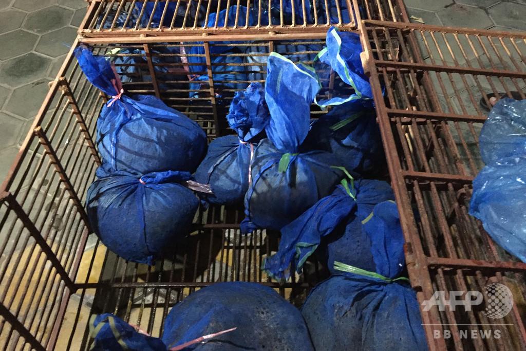 生きたセンザンコウ30匹発見、密輸容疑の夫婦を逮捕 ベトナム