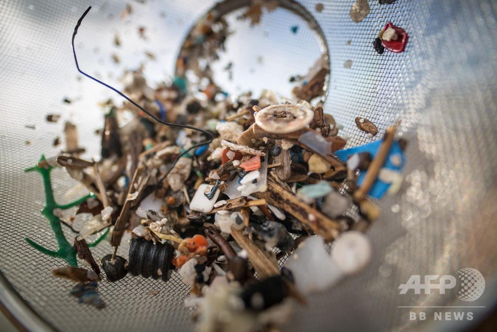 人体に取り込まれるマイクロプラスチック、年間12万個超 研究