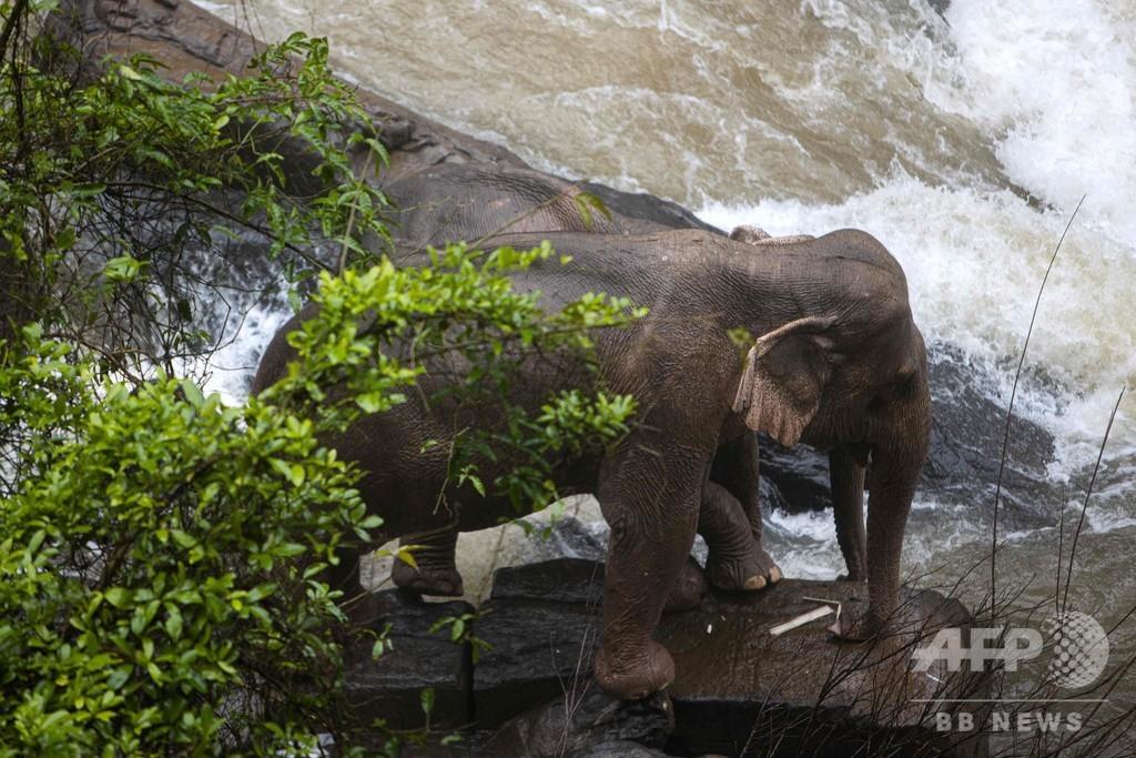 ゾウ6頭が滝に落ちて死ぬ、仲間を助けようとして立ち往生の2頭を救出 タイ