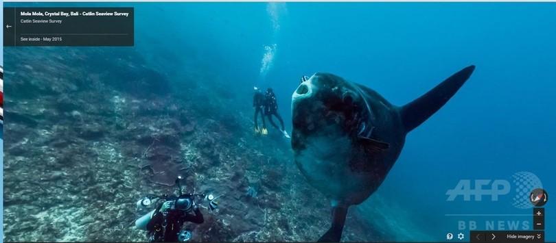 グーグルアース、世界海洋デーに合わせ海中画像追加