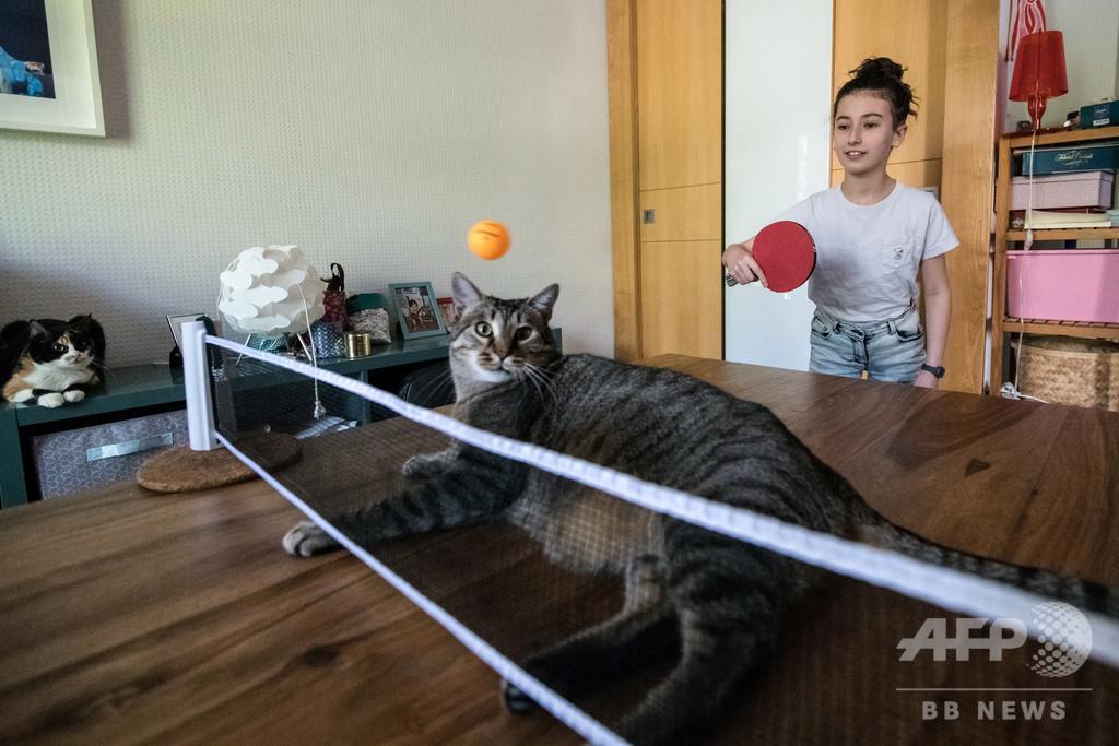 【今日の1枚】ニャンコも参戦!? 自宅で卓球