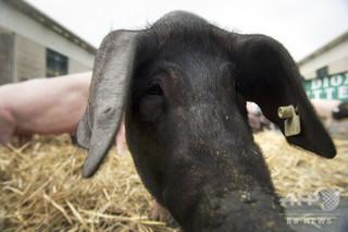 欧州で家畜飼料からGMO由来の禁止添加物、100万トン以上に混入か 仏紙報道