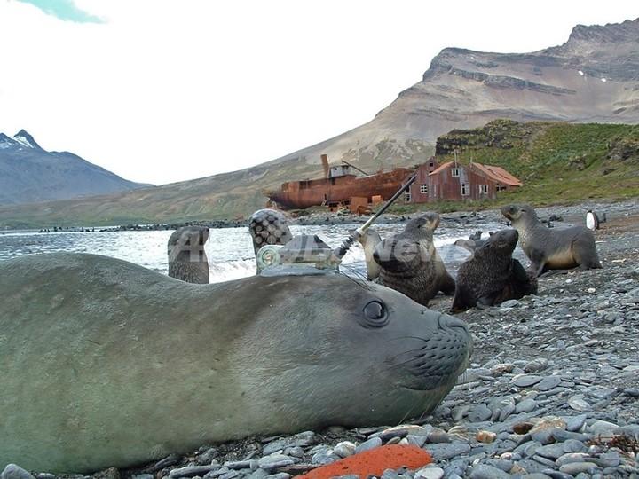 南極海の気候変動調査にゾウアザラシを活用