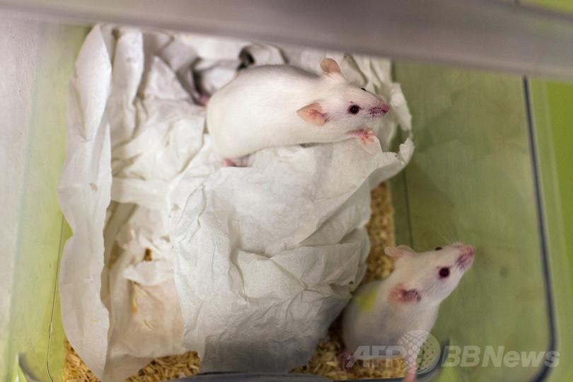 グルコサミンに寿命延長効果、マウス実験で確認 スイス研究