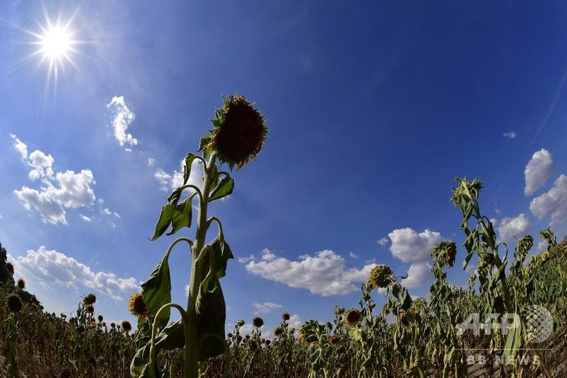 現在の地球は「温室」化の瀬戸際 人が住めなくなると警鐘